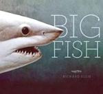 (H/B) BIG FISH