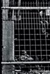 ΤΟ ΜΥΘΙΣΤΟΡΗΜΑ ΕΝΟΣ ΑΝΘΡΩΠΟΥ ΔΙΧΩΣ ΠΕΠΡΩΜΕΝΟ (ΣΥΛΛΕΚΤΙΚΗ ΕΚΔΟΣΗ)