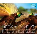 (H/B) BIRDS OF PARADISE