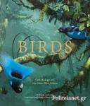 (H/B) BIRDS