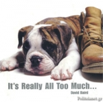 (H/B) IT'S REALLY ALL TOO MUCH (ANIMAL GIFT BOOKS)
